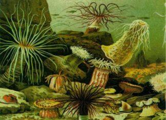 Закономерности экоистории