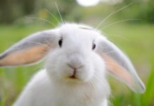 Кролик-Йорик