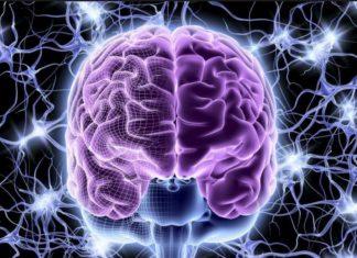 Современные представления о принципах структурной и функциональной эволюции мозга