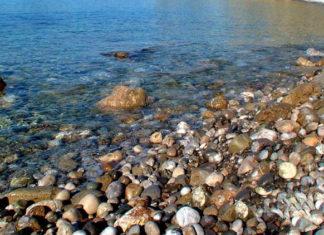 Экосистемы Черного моря