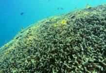 Планктонные и бентосные водоросли